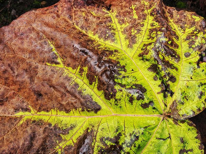 Reakcje chemiczne w roślinach