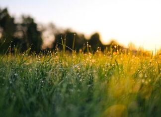 Jak kontrolować rozrost trawy